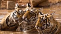 Corbett National Park 06 Days Tour with Delhi Excursion, 3 Star Comfort, New Delhi, Attraction...