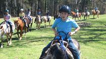 Horseback Riding Adventure on the Flame Azalea Trail, Asheville