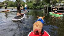 SUP PUP Paddleboard Tour, Fort Lauderdale, Cultural Tours