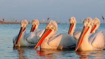 Two-day Birding Trip: Cape Kaliakra & Srebarna Lake, Varna, Multi-day Tours