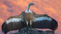 Two-day Birding Trip: The Eastern Rhodopes & Sakar, Varna, Multi-day Tours
