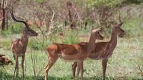 1 day Safari Akagera National Park Rwanda, Kigali, Attraction Tickets