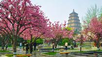 2 Days Xian Small Group Tour: Terracotta Army and City Sightseeing, Xian, Multi-day Tours