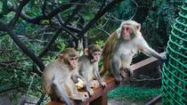 One Day Private Tour of Monkey Island and Nantian Hot Spring, Sanya, Private Sightseeing Tours