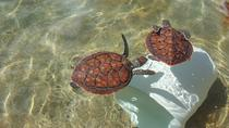 Grand Cayman Combo Tour: Stingray City and Turtle Farm, Cayman Islands, Submarine Tours
