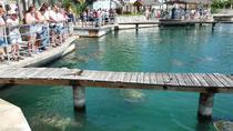 Grand Cayman Stingray City, Coral Garden and Turtle Farm Tour