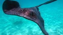 Grand Cayman Stingray City Experience with Snorkeling, Cayman Islands, Day Cruises