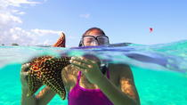 Starfish and Stingray City Adventure with Snorkeling, Cayman Islands, null