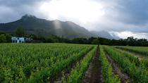Vine Hopper: Hop-On Hop-Off Wine Tour - Eastern Route, Stellenbosch, null