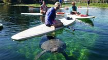 Stand-up Paddleboard with Manatees , Orlando, 4WD, ATV & Off-Road Tours