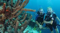 Certified Scuba Diving in Curacao, Curacao, Scuba Diving