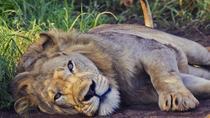 2 Days Akagera National Park Wildlife Safari, Kigali, Attraction Tickets