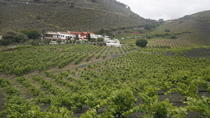 Canarian Wine Experience, Gran Canaria, Food Tours