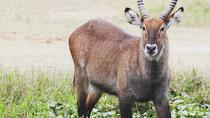 Day tour to Akagera national park for a Wildlife Safari, Kigali, Attraction Tickets