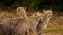 Ann Van Dyk Cheetah Centre Half-Day Tour from Johannesburg, Johannesburg, Half-day Tours