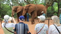 Elephant Sanctuary Tour From Johannesburg, Johannesburg, Day Trips