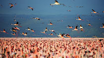 Lake Nakuru Guided Day Trip from Nairobi, Nairobi, Day Trips