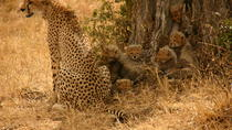 Nairobi National Park, Elephant Orphanage and Giraffe Feeding Guided Day Tour in Nairobi, Nairobi, ...
