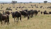 2 days Masai mara (Air Safari) Departing Mombasa, Mombasa, Cultural Tours