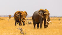 4 Days Tsavo West Amboseli and Tsavo East Mombasa Safari, Mombasa, Cultural Tours