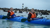 Pelican Point Kayaking Half-Day Tour, Walvis Bay
