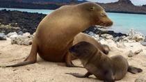 5 Day Galápagos Islands Land Tour, Galapagos Islands, Multi-day Tours