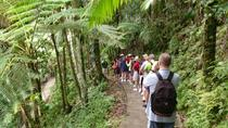 Rainforest Nature Walk to Waterfall Adventure, San Juan