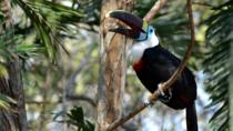 Birdwatching at the National Aviary from Cartagena