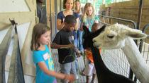 Holiday Tour of an Alpaca Farm, Boone, Seasonal Events