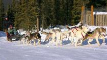 1-Hour Winter Dog Mushing and Sledding in Fairbanks, Fairbanks