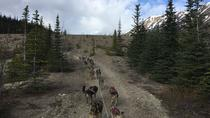 Sled Dog Adventure and Pan for Gold in the Yukon, Skagway, Ski & Snow