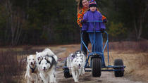 Dogsledding Adventure On Wheels, Pagosa Springs, Ski & Snow