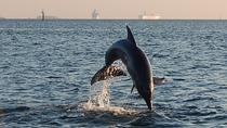 1.5-hour Dolphin Sightseeing Cruise from Tampa, Tampa, Dolphin & Whale Watching