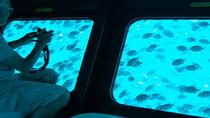 3-Hour Glass Boat Trip with Transfers, Hurghada, Glass Bottom Boat Tours