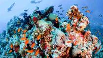 Snorkeling at Ras Mohammed Park By Boat, Sharm el Sheikh, 4WD, ATV & Off-Road Tours