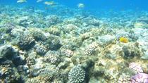 Snorkeling Trip Round Utopia Island, Hurghada, Snorkeling