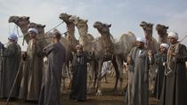Cairo Unusual Day Tour Visit Camel Market in Birqash, Cairo, Half-day Tours
