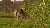 Half-Day Trip to Egyptian Green Farm from Cairo with Breakfast, Cairo, Half-day Tours