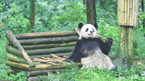 1 Day Chengdu Downtown Tour, Chengdu, Custom Private Tours