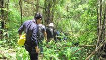 Trekking Trip (Doi Suthep Area), Chiang Mai, Hiking & Camping