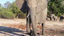 12-Day Small Group Delta and Chobe Waterways Tour from Johannesburg, Johannesburg, Multi-day Tours