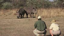 14-Day Small Group South Africa Safari from Johannesburg, Johannesburg, Multi-day Tours