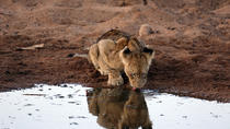 7-Day Small Group Kruger and Victoria Falls Safari from Johannesburg, Johannesburg, Multi-day Tours