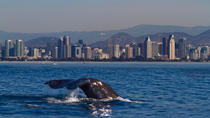 Whale Watching Adventure, San Diego, City Tours
