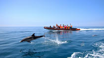 Dolphin Watching and Cave Tour from Vilamoura, Faro
