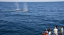 Blue Whale Perth Canyon Expedition, Perth, Day Cruises