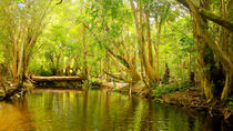 Private Half Day Tour: Exclusieve World Heritage Rainforest and Waterfall Tour vanuit Cairns, ...