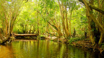 Private Half Day Tour: Exclusive World Heritage Rainforest and Waterfall Tour from Cairns, ...