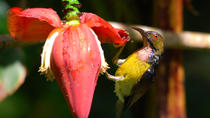Half-Day Penang Hill Nature and Bird Watching Walking Tour Including Lunch, Penang, Private ...