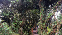 Cameron Highlands: Mossy Forest Discovery, Ipoh, Nature & Wildlife